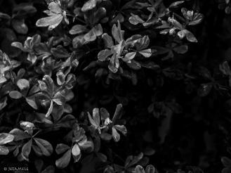 Grau in Grau