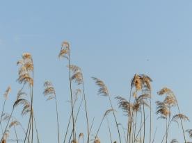 Windwedel