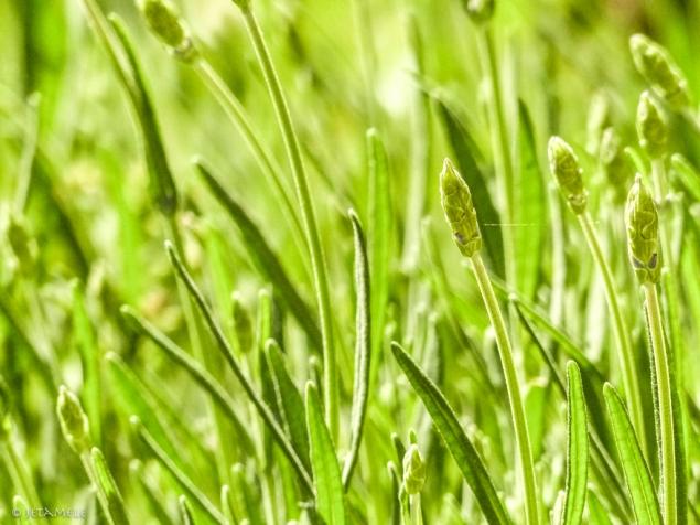 Grasrauschen