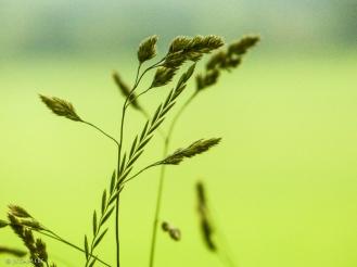 Gräsergrün