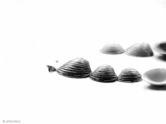 Muschelliebe