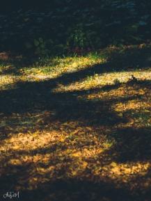 Bodenbeleuchtung